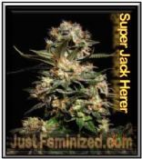 Just Feminized Super Jack Herer Mix & Match Single Cannabis Seeds